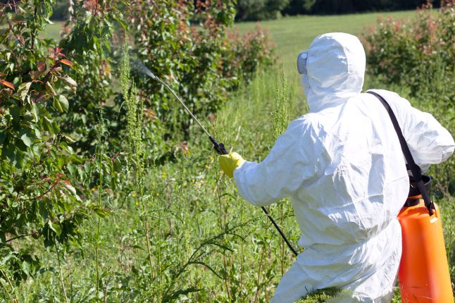 69669648 - farmer spraying toxic pesticides or insecticides in fruit orchard